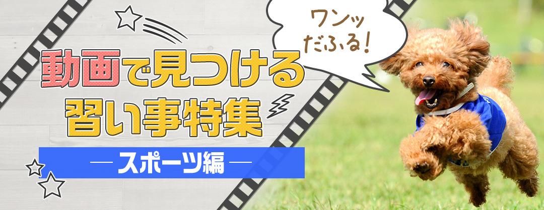 動画で見つける習い事特集 スポーツ編