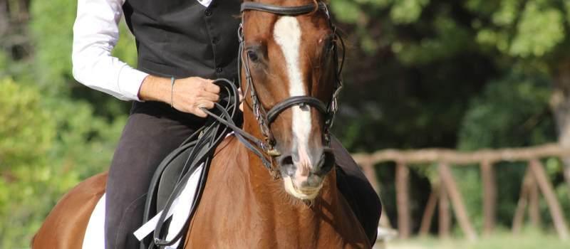 Horse 2742287 1920  1  main