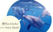 Blue oceanの写真4